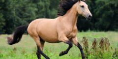 الحصان الأندلسى