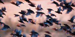 جدول هجرة الطيور وعودتها وأنماط الهجرة وأسبابها
