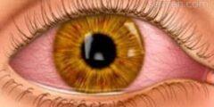 ما تركيب العين الذي يقدم المعلومات المتعلقه بالوان المخ