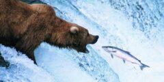 العلاقة الغذائية بين بعض المخلوقات الحية في النظام البيئي
