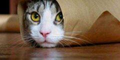 علامات شفاء القطط من الفطريات وأعراضها