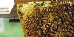 طريقة تغذية النحل في الشتاء