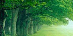 ما هي الاية الكريمة التي ذكر فيها الشجر الاخضر