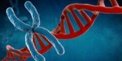 كم عدد الكروموسومات في جسم الإنسان؟