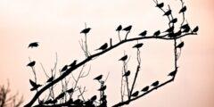 الطيور على اشكالها تقع.. أصل المثل ومعناه ومتى يقال