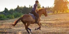 تعليم ركوب الخيل بالطريقة العربية أو الغربية وأهم التدريبات اللازمة للتعليم
