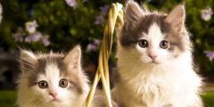 ما هو الفرق بين القط الذكر والأنثى بالصور؟