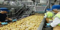 بحث عن الصناعات الغذائية في مصر