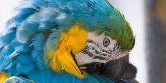 تمر الطيور بمنقارها على طول الريشة لماذا؟