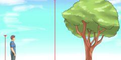 الوحدة المناسبة لقياس ارتفاع شجرة