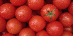 أنواع الطماطم