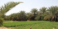 خصائص النباتات البذرية