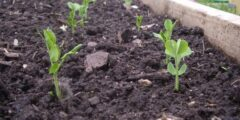 طرق المحافظة على التربة