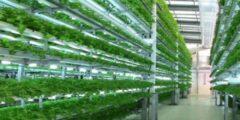 طريقة الزراعة بدون تربة