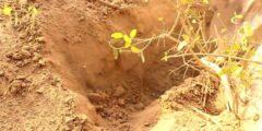كيفية زراعة شجرة الأراك