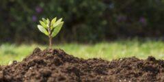 كيف تتشكل التربة