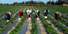 مفهوم الزراعة المعيشية