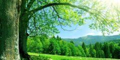 مقال عن وصف الجنة ونعيمها