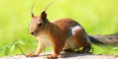 ما هو الحيوان وما التركيب الداخلي لجسم الحيوان