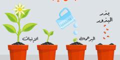 مراحل دورة نمو النباتات الزهرية