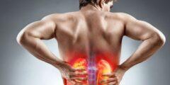 19 معلومة عن دور وظائف الكلى في جسم الإنسان