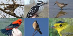 انواع الطيور بالصور واسمائها