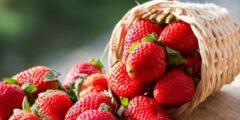 حساسية الفراولة