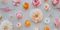 اسماء الزهور بالفرنسي