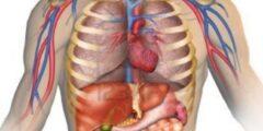 معلومات عن جسم الإنسان