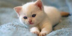 تفسير حلم رؤية قطة في المنام
