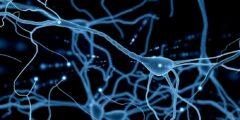 تعريف الخلايا العصبية